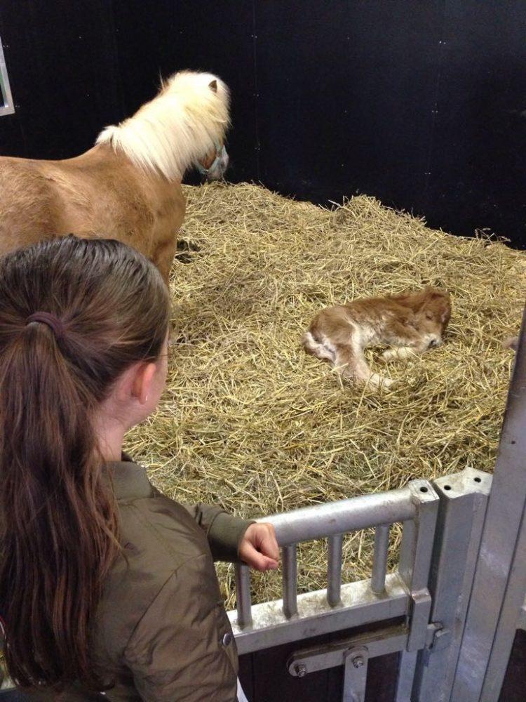 Avonturenboerderij Molenwaard uittip familie-uitje